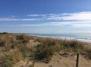 dune agli Alberoni